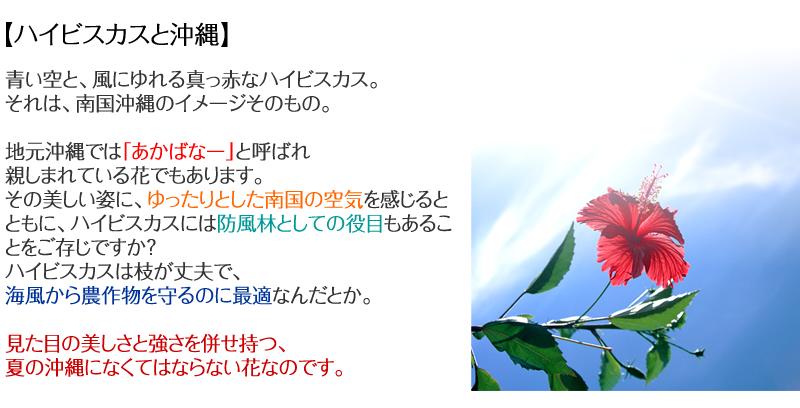 【沖縄とハイビスカス】